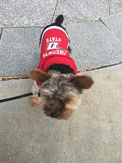 Pictured: A pup spotted wearing an O-State sweater